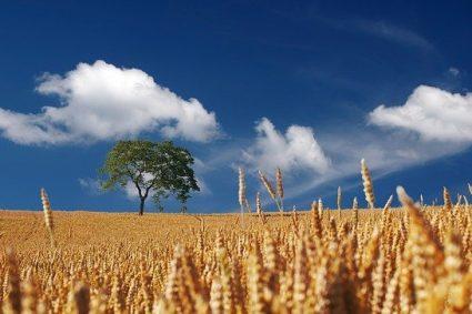 Jak chronić uprawy przed chwastami?